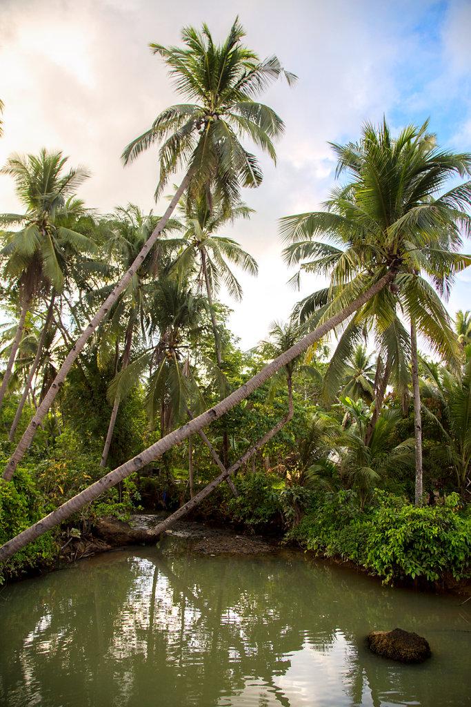 fleuve-et-palmier-sur-la-route-el-nidopalawan.jpg