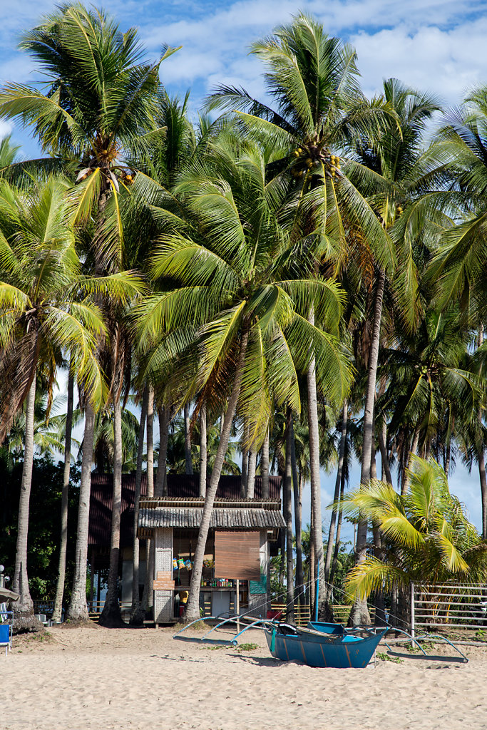 palmiers-cabane-Nacpan-Beach-el-nido-palawan.jpg